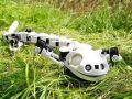 瑞士3D打印出娃娃鱼机器人