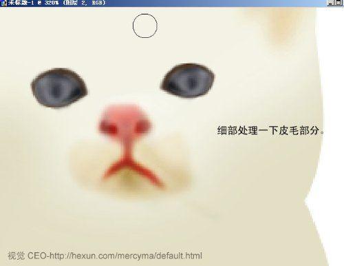 可爱的白色猫咪图片