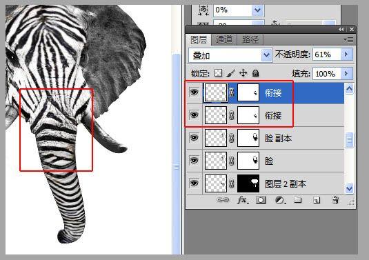 ps合成另类创意斑马象图片的详细步骤