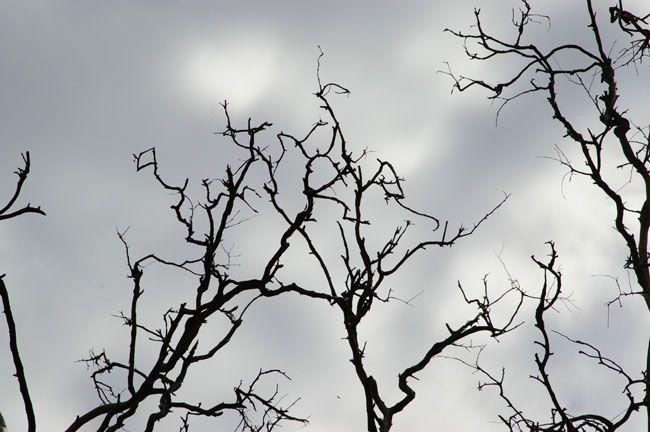 ps如何合成恐怖白衣树妖图片效果
