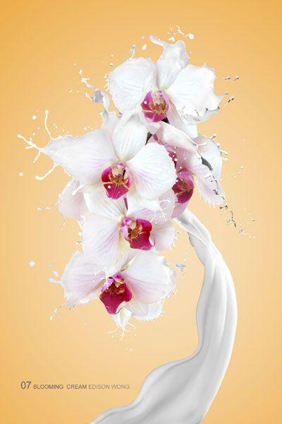 ps合成动感牛奶花朵图片的详细步骤