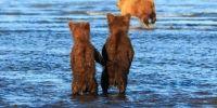 两只可爱小熊手拉手等妈妈捕鱼归来!