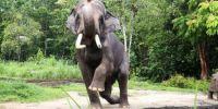 """新加坡明星大象""""查旺""""成动物大使 宣扬保育讯息"""