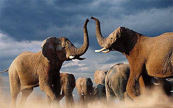 动物世界的争斗 堪比现实版疯狂动物城