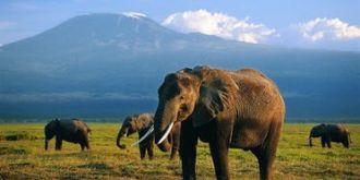 大象的寿命有多长:一般能活到180到200岁!