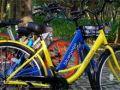 摩拜/ofo回应上海停止投放共享单车传闻:没接到书面通知