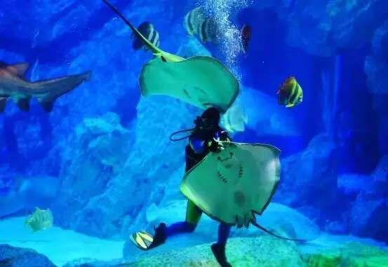 壁纸 海底 海底世界 海洋馆 水族馆 桌面 553_381