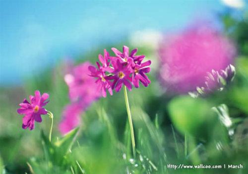Photoshop特效 水彩效果的花卉图片