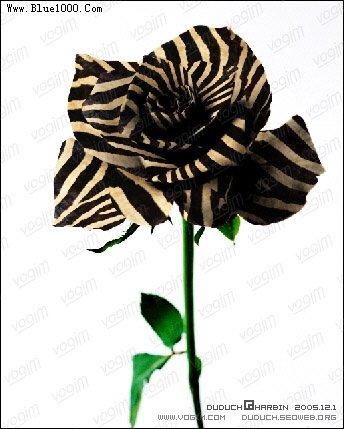 Ps滤镜为玫瑰花瓣穿上斑马纹