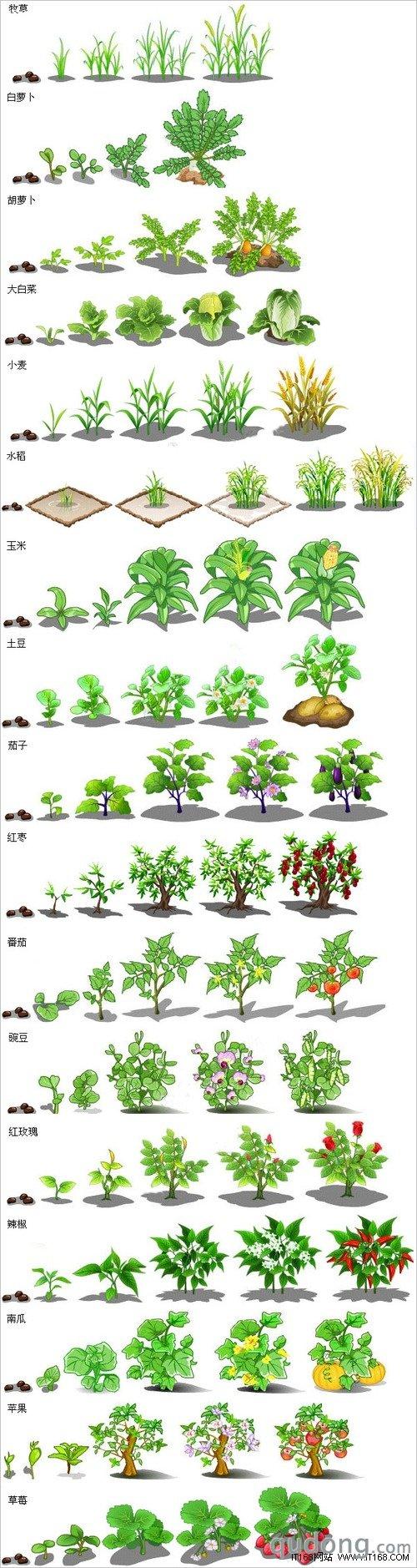 Q农场作物成长过程全景图