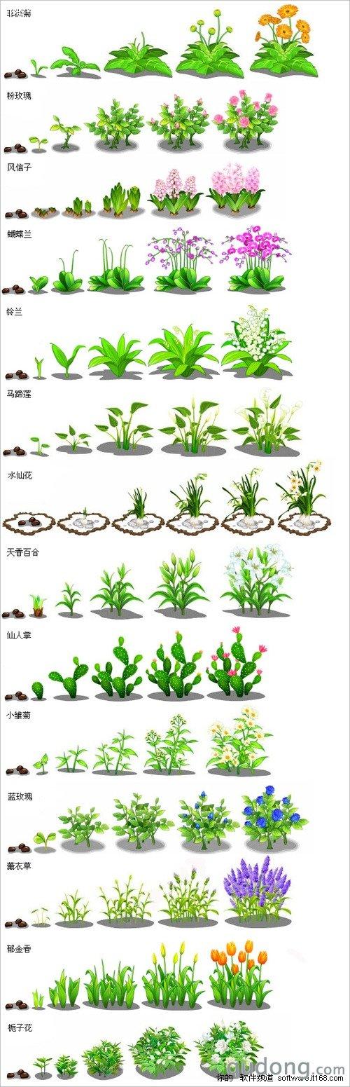 很全很漂亮 QQ农场作物成长过程全景图