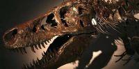 科学家称地球正面临第六次生物大灭绝危险