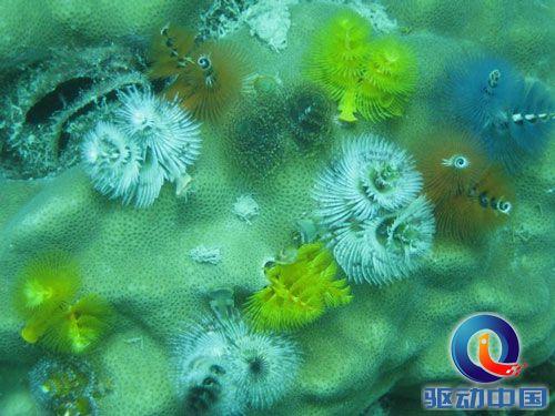 盘点:十大最美丽奇特的海洋生物