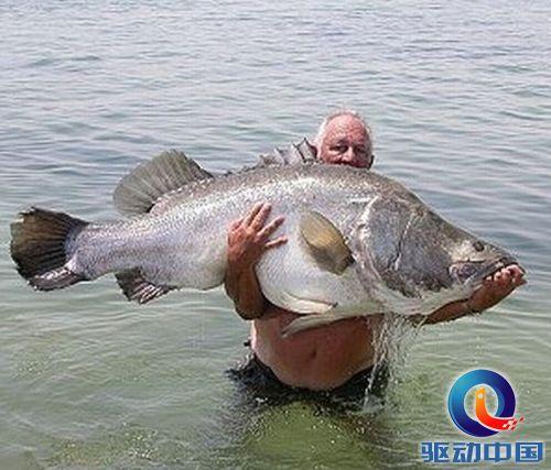 世界上最大的鱼 又见深海怪鱼 《多图》