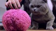 """一个神奇的小球 能""""吃灰""""还会逗宠物玩"""