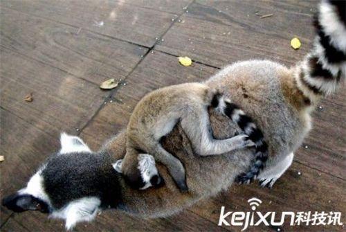 全球最萌动物排行榜:可爱的它们怎能伤害
