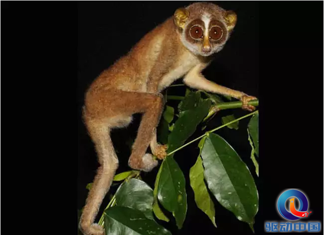 18种濒临灭绝的动物,你肯定没见过!