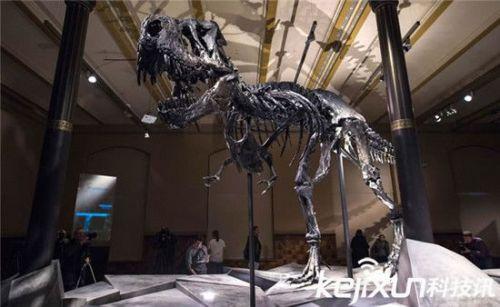 霸王龙几近完整骨骼在德国柏林自然历史博物院展出
