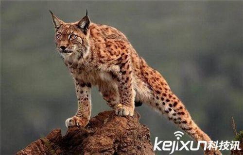 盘点全球极其罕见杂交动物 狮虎虎狮大有不同