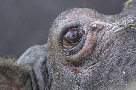 十大最奇特的动物眼睛