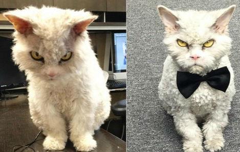 动物很生气很愤怒的图片