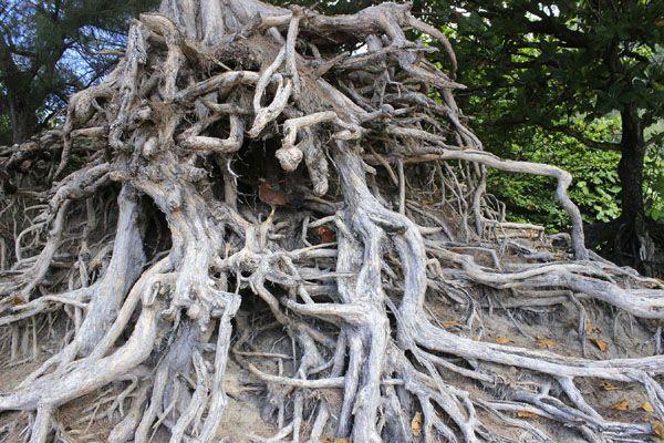 PS如何合成惊悚恐怖骷髅树桩图片