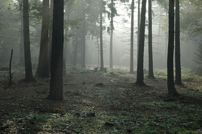 ps合成恐怖奇幻森林场景照片的详细步骤