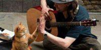 男子流浪卖艺捡回受伤小猫,患难与共成为好兄弟!