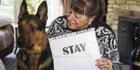 英国流浪狗鲁弗斯变身全能狗 热爱学习能听会做