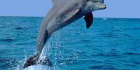 太神奇了!海豚被螺旋桨割到重伤,1年后自愈!