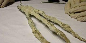 惊讶!秘鲁发现神秘三指手掌,一根手指就有20厘米长