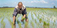京东五常大米农户陈志阳的首次618:从卖原稻到加工打包发货一条龙的发展路
